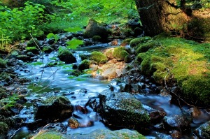 slow-water-river-1013tm-pic-1292